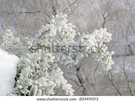 snow covered branch on frosty winter day - stock photo