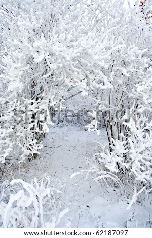 Snow covered branches in winter forest - stock photo