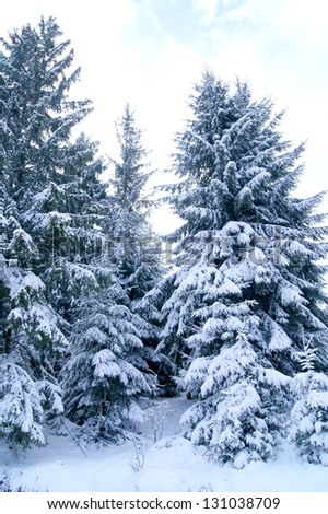 Snow-covered fir on the slope of the Carpathian Mountains - stock photo