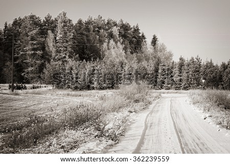 snow-covered fir tree in winter, snow and fields, snow and Christmas atmosphere