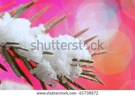 snow-covered fir tree on holiday background
