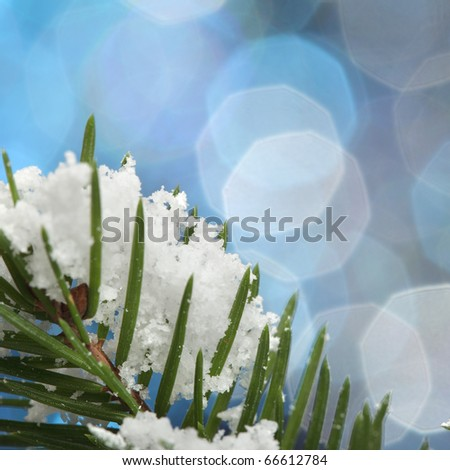 snow-covered fir tree on holiday background - stock photo