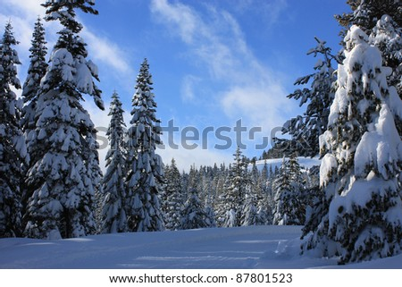 Snow-covered fir trees - stock photo