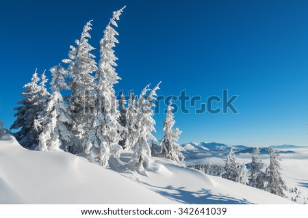 snow-covered firs in winter mountains - stock photo