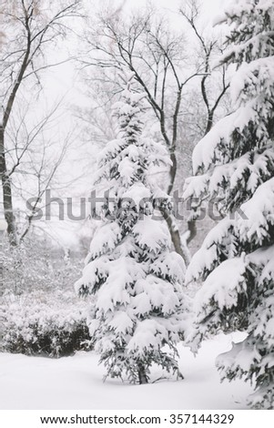 Snow Covered Firs,Selective Focus  - stock photo