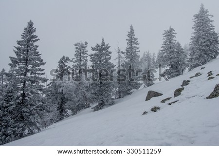 snow-covered forest on the slopes of the mountain. winter landscape - stock photo
