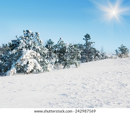 snow-covered fur-tree against the blue sky grows on a hillside  - stock photo