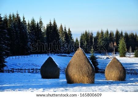 Snow covered haystacks at winter - stock photo