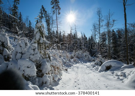 Snow-covered landscape - stock photo