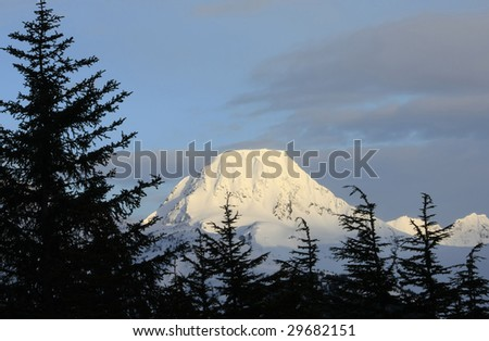 Snow covered mountain with trees - stock photo