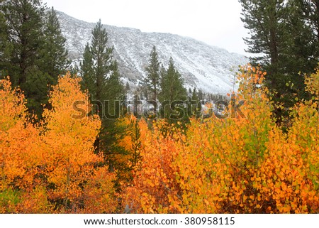 Snow covered mountains and Aspen trees in Sierra Nevada mountains - stock photo