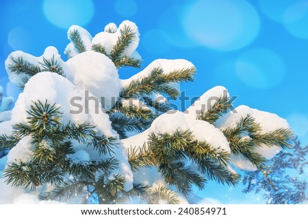 Snow-covered pine tree against the blue sky - stock photo