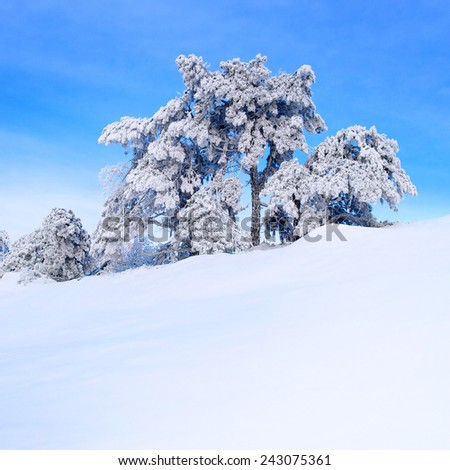 Snow-covered pine tree on a hillside. - stock photo