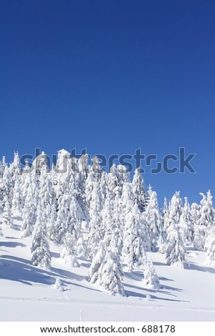 snow covered  pine trees and blue sky - stock photo