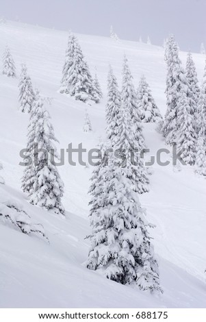 snow covered pine trees in mountains - stock photo