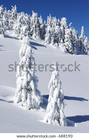 snow covered pine trees on mountain side - stock photo
