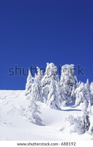 snow covered pine trees with blue sky - stock photo