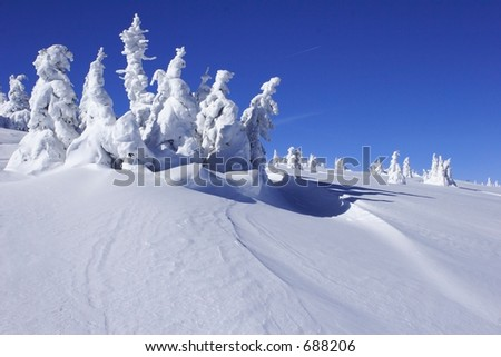 snow covered pine trees with snow drift - stock photo
