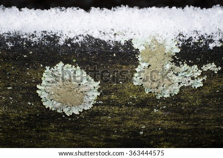 snow covered plank with lichen - stock photo