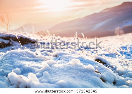 Snow-covered plants on the mountain at sunset. Beautiful winter landscape. Small depth of field