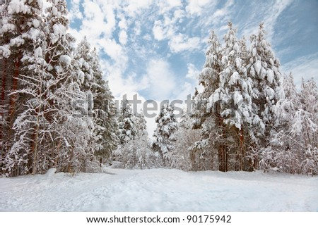 Snow-covered road in the northern winter forest - landscape - stock photo