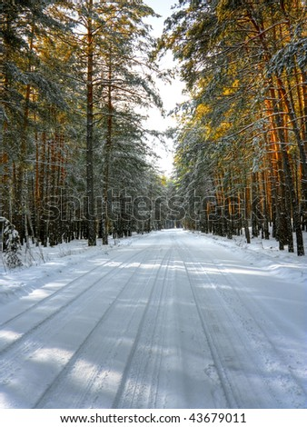 Snow-covered road in winter forest. HDR image