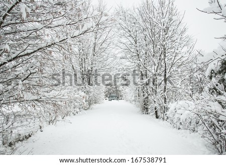 Snow covered road lined with trees - stock photo