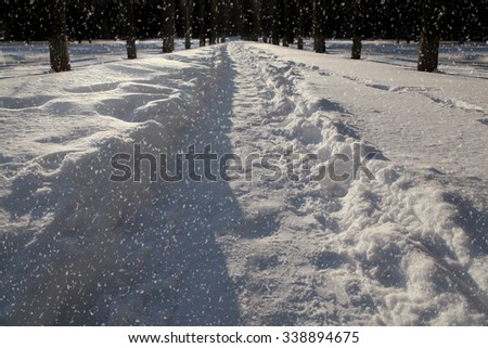 Snow covered road lined with trees at night - stock photo