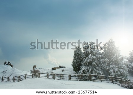 snow-covered spruce - stock photo