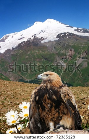 Snow-covered top of Elbrus and the eagle.(5642 m height), Balkaria,Central  Caucasus, Russia. - stock photo