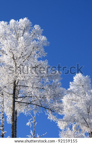 Snow-covered tree against the blue sky - stock photo