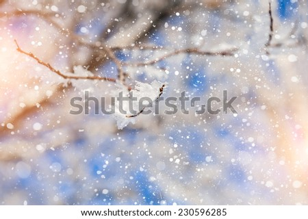 Snow covered tree and snowfall. Beautiful winter landscape. Small depth of sharpness. Winter background - stock photo