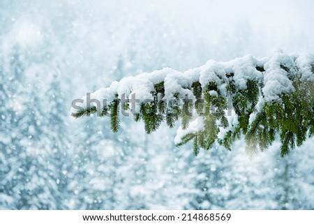 Snow-covered tree branch - stock photo