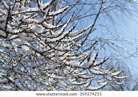 Snow-covered tree branches - stock photo