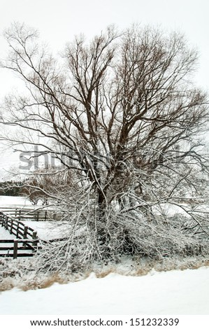 Snow covered tree during Christmas snowfall - stock photo