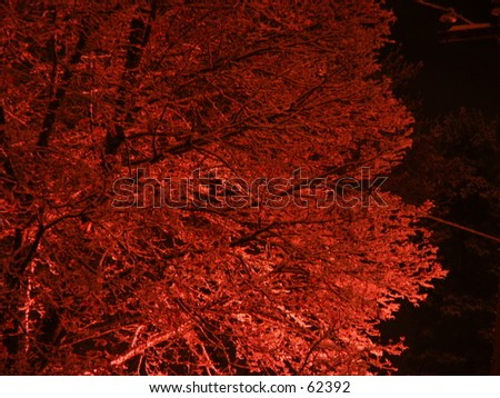 Snow covered tree looking red - stock photo