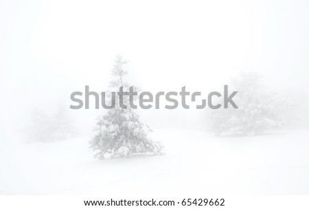 Snow covered tree on Ay Petri mountain in the fog.  Ukraine - stock photo