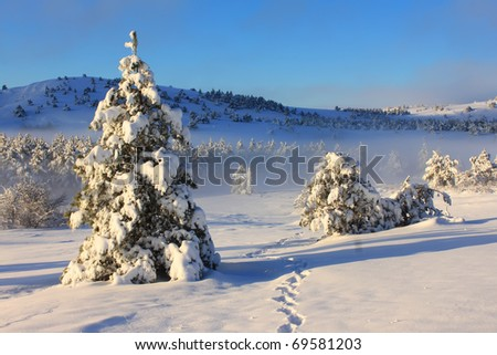 Snow-covered trees against the backdrop of a misty forest in the mountains