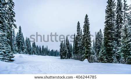 Snow covered trees and deep snow pack in the high alpine at the village of Sun Peaks in the Shuswap Highlands of central British Columbia Canada under cloudy skies - stock photo