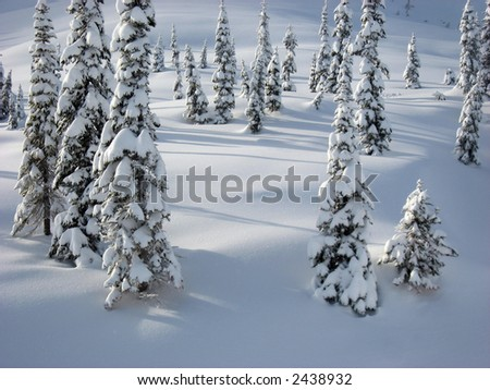 Snow covered trees in a field of snow - stock photo