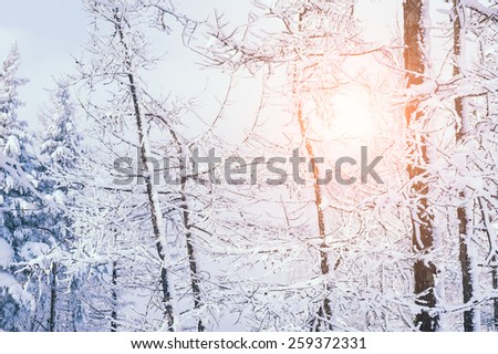 Snow covered trees in the forest at sunset. Beautiful winter landscape. Creative toning effect - stock photo