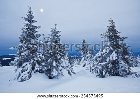 snow-covered trees in the moonlight - stock photo