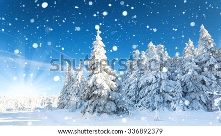 Snow covered trees in the mountains at sunset. Beautiful winter landscape. Winter forest. - stock photo