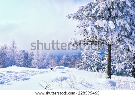 Snow covered trees in the mountains. Beautiful winter landscape. Winter forest. Creative toning effect - stock photo