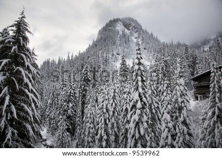 Snow Covered Trees Mountain, Ski Lodge, Alpental, Snoqualme Pass, Washington - stock photo