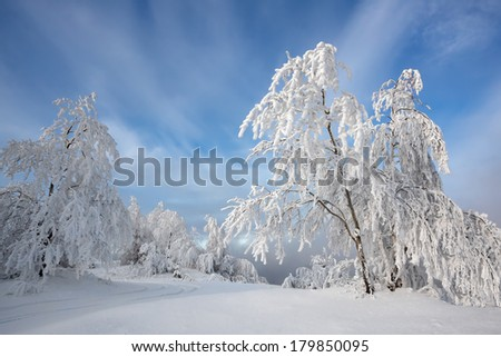 Snow-covered trees on a background of the beautiful cloudy sky, Russia, Siberia - stock photo