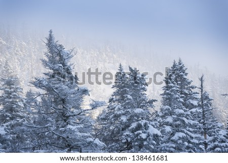 Snow covered trees on Mt. Mansfield, Stowe, Vermont, USA - stock photo
