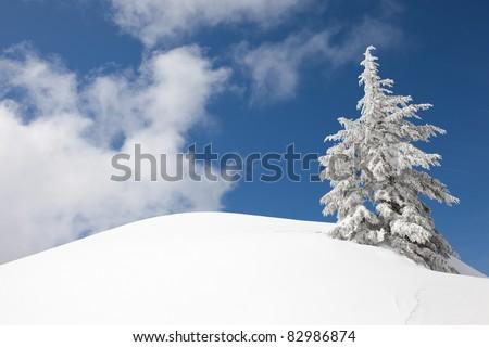 Snow-covered Trees on Snow Mountain - stock photo