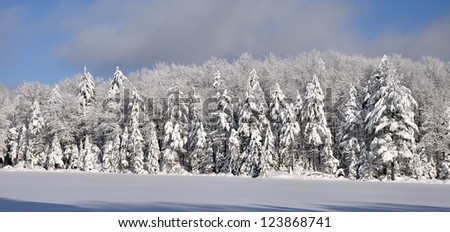 Snow covered trees surrounding a frozen Adirondack Lake