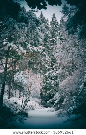 Snow covered tress at the Glenmore Forest Park, Cairngorms in the Scottish Highlands, UK. Added grain and colour styling. - stock photo